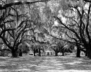 Avenue of Oaks, South Carolina