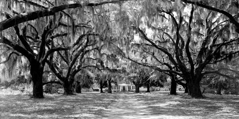 Avenue of Oaks, South Carolina