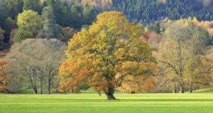 Mixed Trees in Autumn Colour, Scotland
