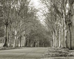 Tree Lined Road, Norfolk, UK