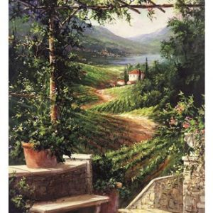 Chianti Vineyard
