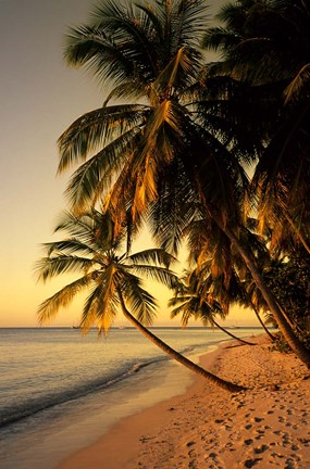 Beach at Sunset, Trinidad, Caribbean