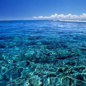 Fiji Islands, Tavarua, coral reef