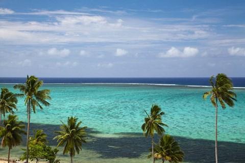 Palm trees and coral reef, Crusoe's Retreat, Coral Coast, Viti Levu, Fiji