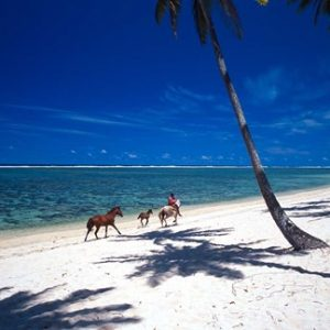 Horses on Beach, Tambua Sands Resort, Coral Coast, Fiji