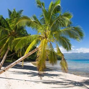 Beach & Palms, Waitatavi Bay, Fiji