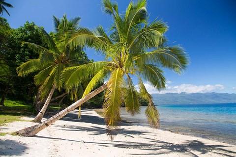 Beach & Palms, Waitatavi Bay, Fiji
