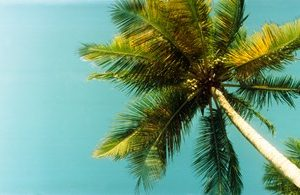 Low angle view of palm tree, Morro De Sao Paulo, Tinhare, Cairu, Bahia, Brazil