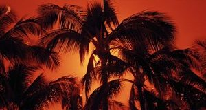 Palm trees at dusk, Kalapaki Beach, Hawaii