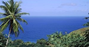 Palm trees on the coast, Tobago, Trinidad And Tobago