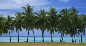 Palms & lagoon Aitutaki Cook Islands