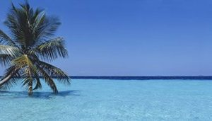 Palm tree in the sea, Maldives