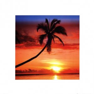 Sunset - Palm Tree