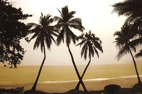 China - Palm Trees Hainan Island