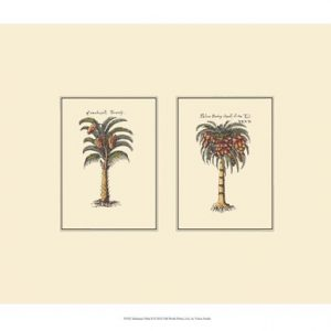Miniature Palm II