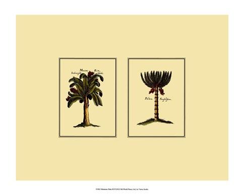 Miniature Palm III